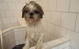 Baila lekker in bad