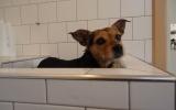Lola na haar pluk beurt nog even in bad