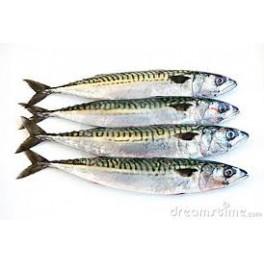 Makreel, 500 gram